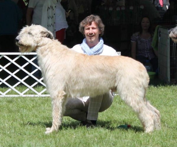 Wolfhound Rüde Gelert Spirit's Big Foot bei der Eurosighthound in Budapest 2013