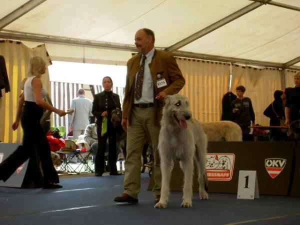 Irish Wolfhound Gelert Spirits Chui mit Exc1 bei der Woorld Dog Show 2012 in Salzburg