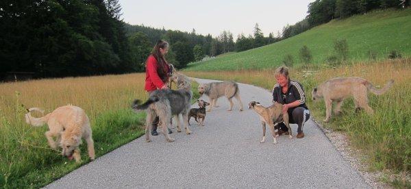 Wolfhounds mit Freunden