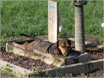 Dackel-Mischling nimmt ein erfrischendes Bad