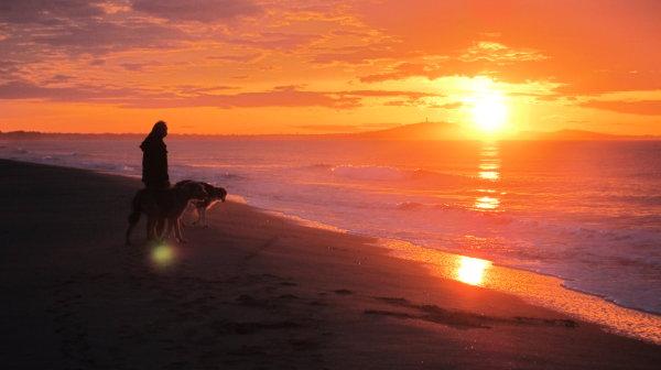 Urlaub mit Hunden