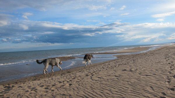 Freilauf für Hunde möglich