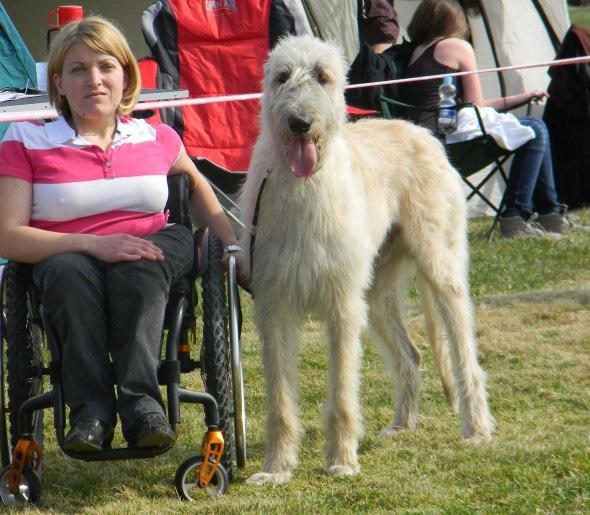 Irish Wolfhound Gelert Spirits Barack