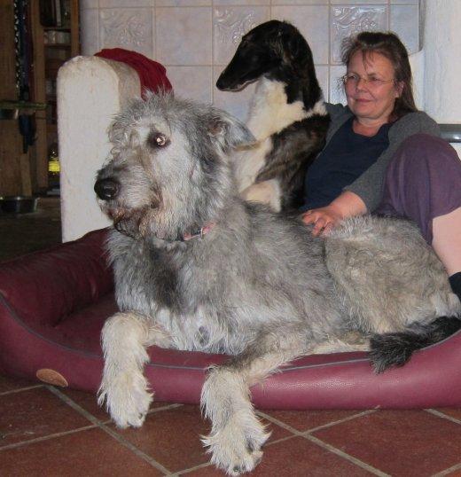 Pause mit Wolfshund und Barsoi