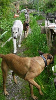 Spiel und Toben mit anderen Hunden sind für jeden Hund wichtig.